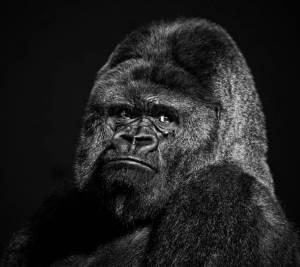 Owlbigred's Profile Picture